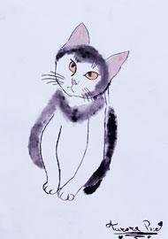 Aurora - gattino
