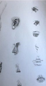 Study of anatomic parts of the face