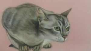 cat, dry pastel