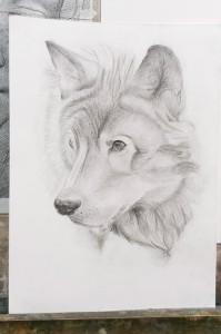 Corsi di disegno per bambini corsi di pittura per bambini for Lupo disegno a matita