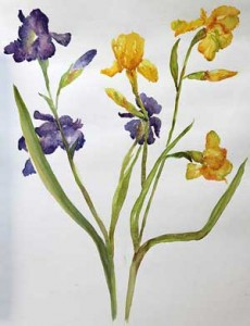 painting of iris flower with watercolor on paper